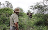 Άνδρας έρχεται αντιμέτωπος με επιτιθέμενο ελέφαντα