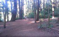 Απλά μια όμορφη μέρα στο δάσος...