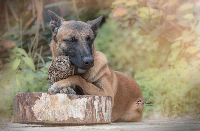 Η ασυνήθιστη φιλία ενός σκύλου με κουκουβάγιες μέσα από εκπληκτικές φωτογραφίες (3)