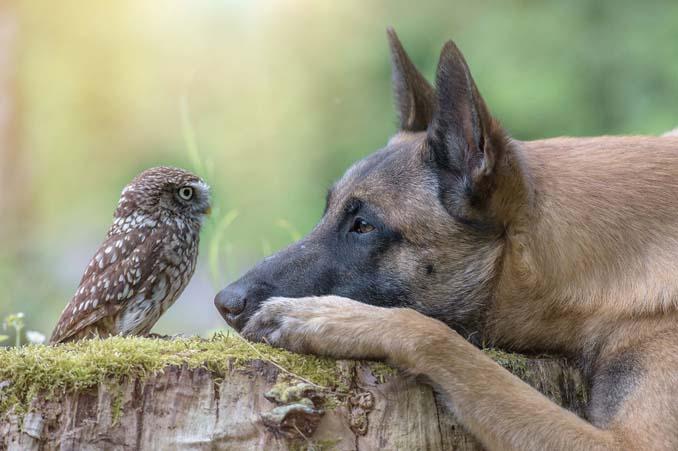 Η ασυνήθιστη φιλία ενός σκύλου με κουκουβάγιες μέσα από εκπληκτικές φωτογραφίες (5)