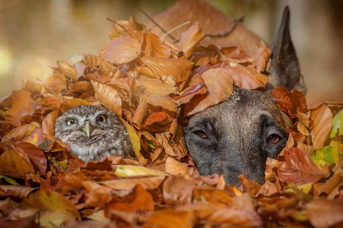 Η ασυνήθιστη φιλία ενός σκύλου με κουκουβάγιες μέσα από εκπληκτικές φωτογραφίες (6)