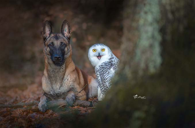 Η ασυνήθιστη φιλία ενός σκύλου με κουκουβάγιες μέσα από εκπληκτικές φωτογραφίες (7)