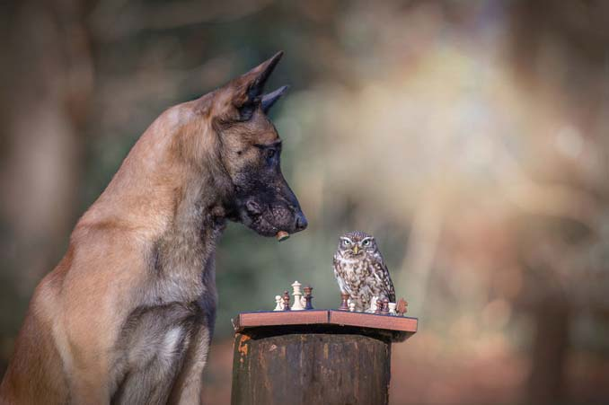 Η ασυνήθιστη φιλία ενός σκύλου με κουκουβάγιες μέσα από εκπληκτικές φωτογραφίες (8)