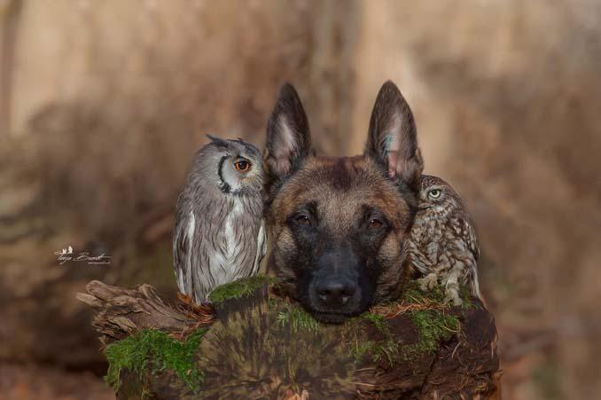Η ασυνήθιστη φιλία ενός σκύλου με κουκουβάγιες μέσα από εκπληκτικές φωτογραφίες (9)