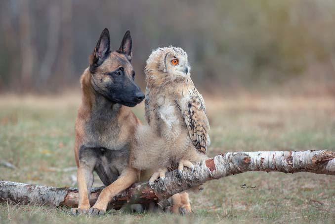 Η ασυνήθιστη φιλία ενός σκύλου με κουκουβάγιες μέσα από εκπληκτικές φωτογραφίες (10)