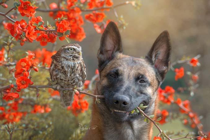 Η ασυνήθιστη φιλία ενός σκύλου με κουκουβάγιες μέσα από εκπληκτικές φωτογραφίες (11)