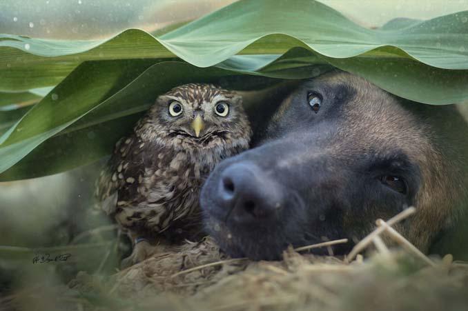 Η ασυνήθιστη φιλία ενός σκύλου με κουκουβάγιες μέσα από εκπληκτικές φωτογραφίες (12)