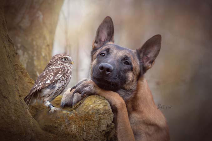 Η ασυνήθιστη φιλία ενός σκύλου με κουκουβάγιες μέσα από εκπληκτικές φωτογραφίες (13)