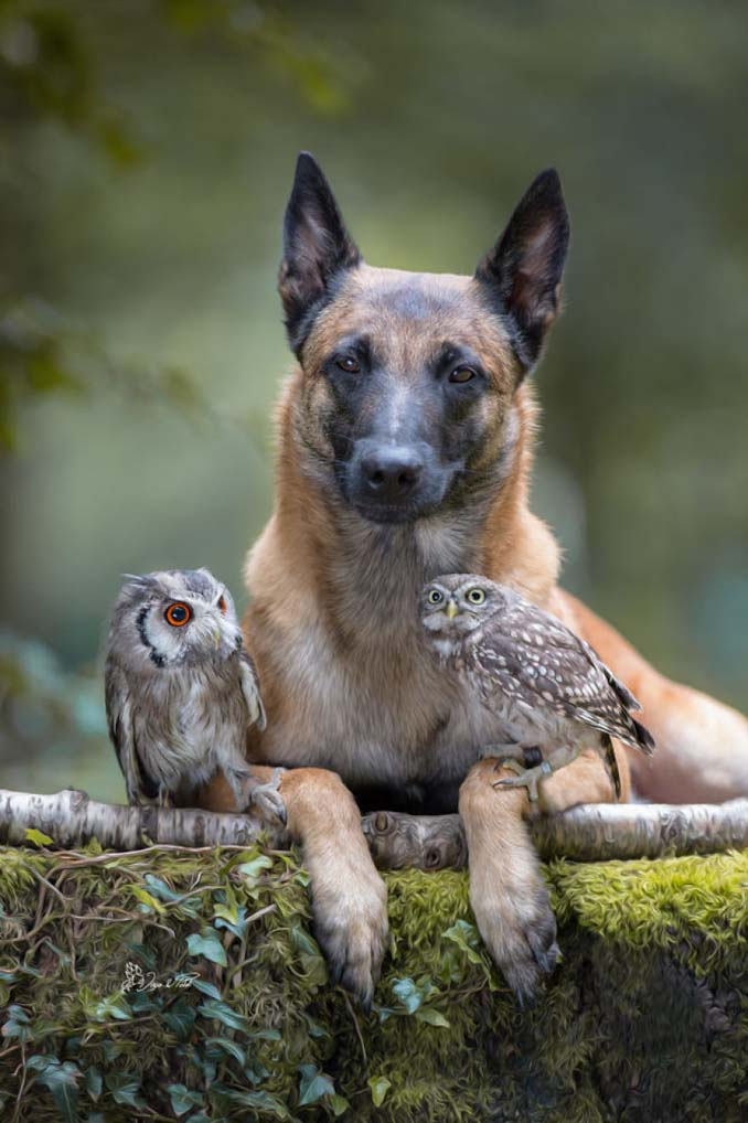 Η ασυνήθιστη φιλία ενός σκύλου με κουκουβάγιες μέσα από εκπληκτικές φωτογραφίες (14)