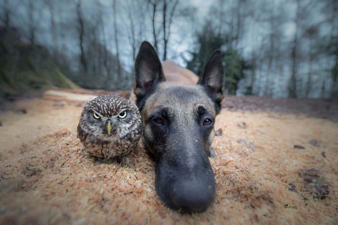 Η ασυνήθιστη φιλία ενός σκύλου με κουκουβάγιες μέσα από εκπληκτικές φωτογραφίες (16)