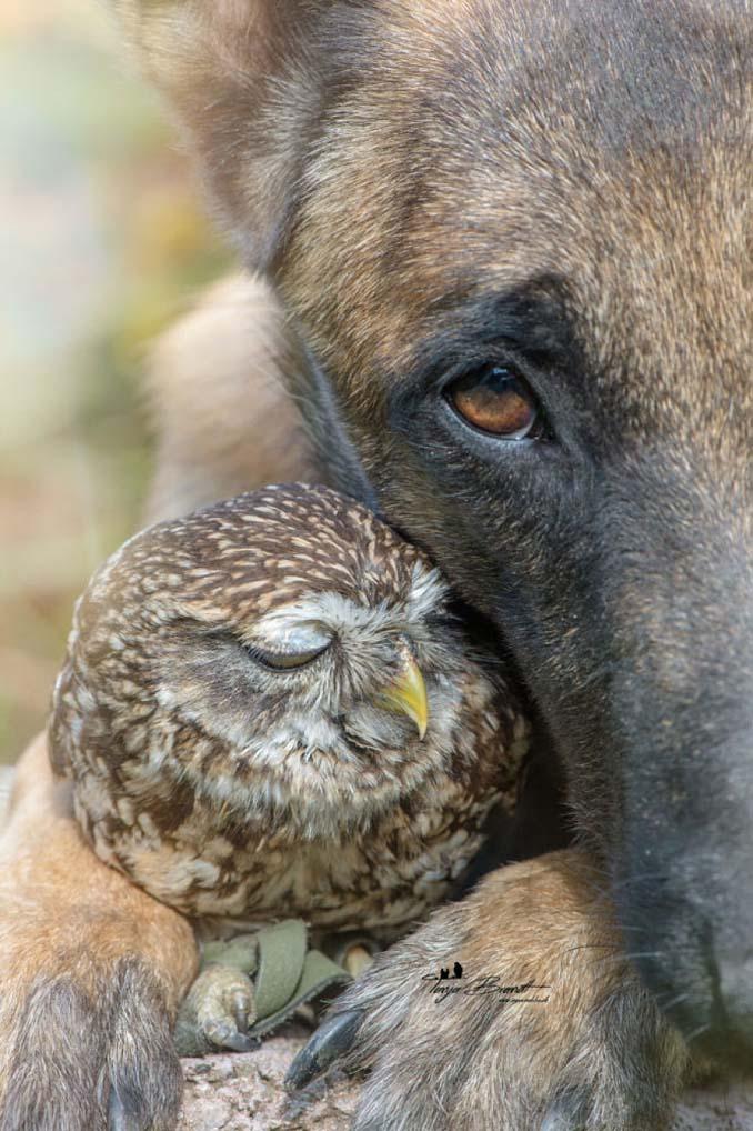Η ασυνήθιστη φιλία ενός σκύλου με κουκουβάγιες μέσα από εκπληκτικές φωτογραφίες (18)