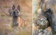 Η ασυνήθιστη φιλία ενός σκύλου με κουκουβάγιες μέσα από εκπληκτικές φωτογραφίες (19)
