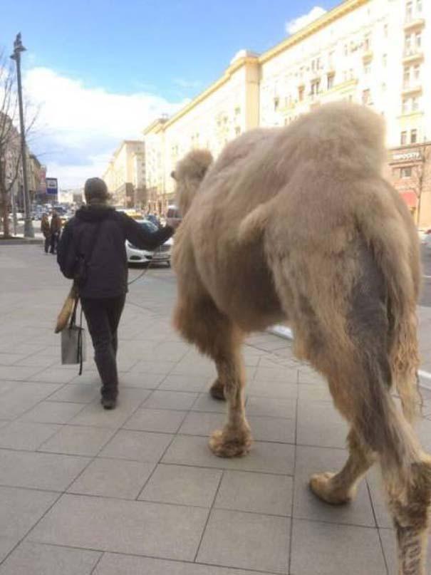 Εν τω μεταξύ, στη Ρωσία... #162 (10)