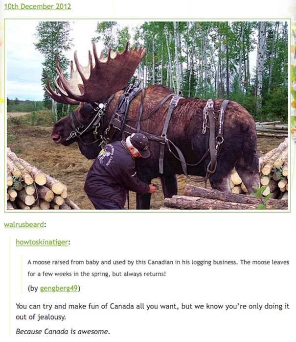 Εν τω μεταξύ, στον Καναδά... #40 (9)