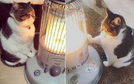Γάτα ερωτεύτηκε μια σόμπα και οι φωτογραφίες της κάνουν το γύρο του διαδικτύου