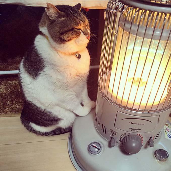 Γάτα ερωτεύτηκε μια σόμπα και οι φωτογραφίες της κάνουν το γύρο του διαδικτύου (1)