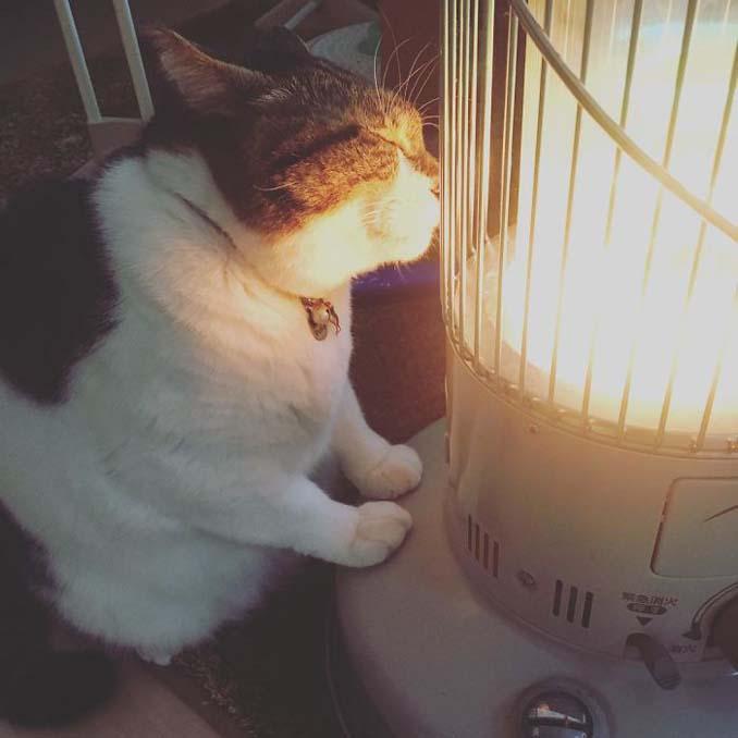 Γάτα ερωτεύτηκε μια σόμπα και οι φωτογραφίες της κάνουν το γύρο του διαδικτύου (2)