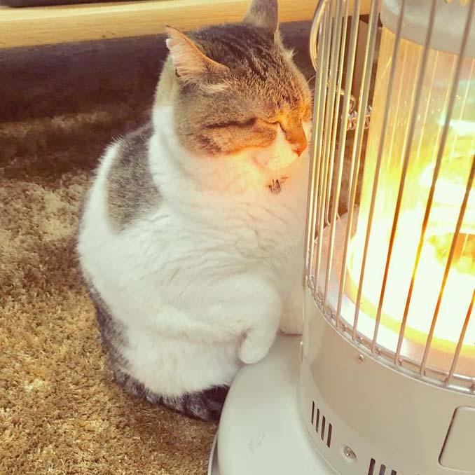 Γάτα ερωτεύτηκε μια σόμπα και οι φωτογραφίες της κάνουν το γύρο του διαδικτύου (3)