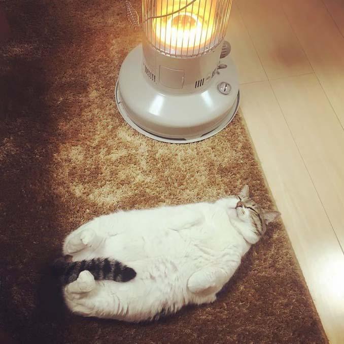 Γάτα ερωτεύτηκε μια σόμπα και οι φωτογραφίες της κάνουν το γύρο του διαδικτύου (4)
