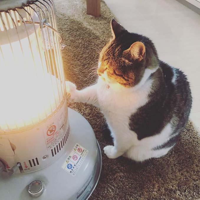 Γάτα ερωτεύτηκε μια σόμπα και οι φωτογραφίες της κάνουν το γύρο του διαδικτύου (6)