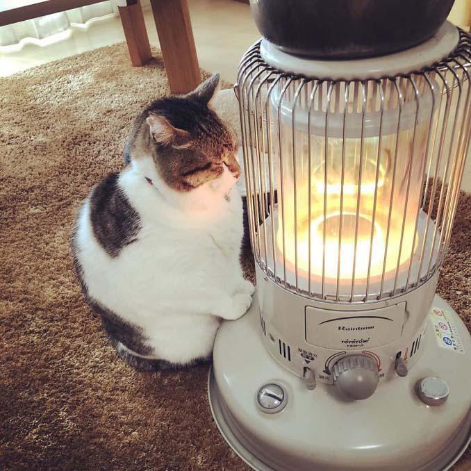 Γάτα ερωτεύτηκε μια σόμπα και οι φωτογραφίες της κάνουν το γύρο του διαδικτύου (7)
