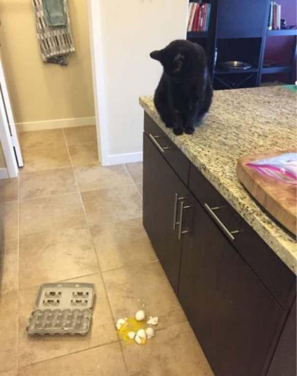 Γάτες που... κάνουν τα δικά τους! #77 (10)