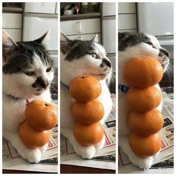 Γάτες που... κάνουν τα δικά τους! #77 (9)