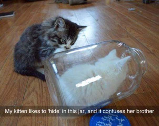 Γάτες που... κάνουν τα δικά τους! #79 (5)