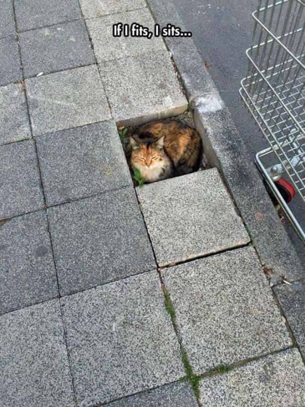 Γάτες που... κάνουν τα δικά τους! #79 (6)