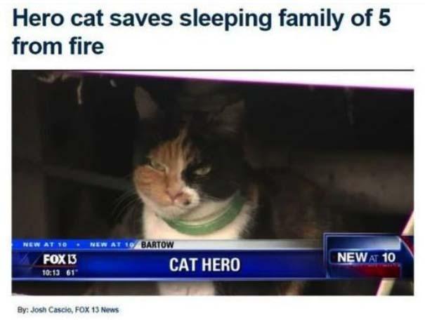 Γάτες που... κάνουν τα δικά τους! #77 (3)