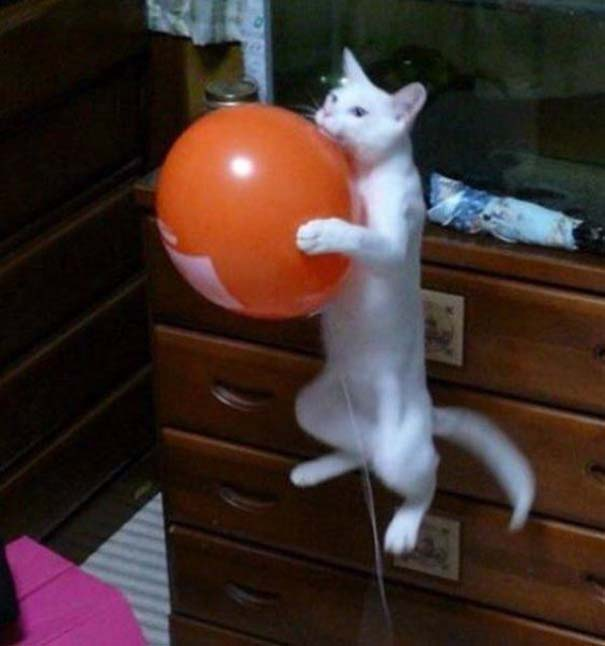 Γάτες που... κάνουν τα δικά τους! #79 (1)