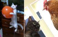 Γάτες που... κάνουν τα δικά τους! #79 (11)