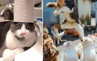 Γάτες που... κάνουν τα δικά τους! #80 (11)