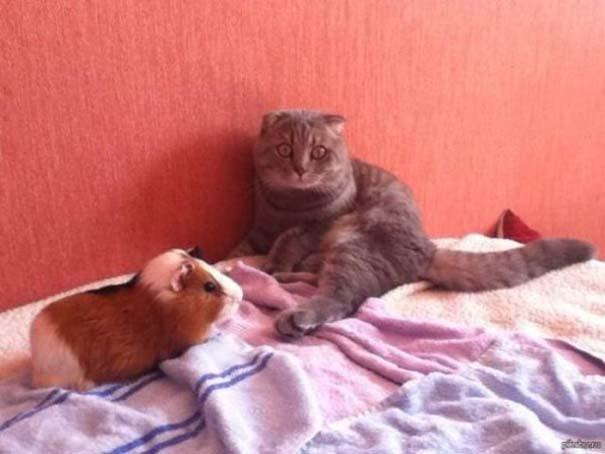 Γάτες που... κάνουν τα δικά τους! #79 (9)