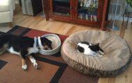 Γάτες που... κάνουν τα δικά τους! #77 (1)