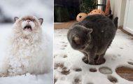 Γάτες έρχονται για πρώτη φορά αντιμέτωπες με χιόνι