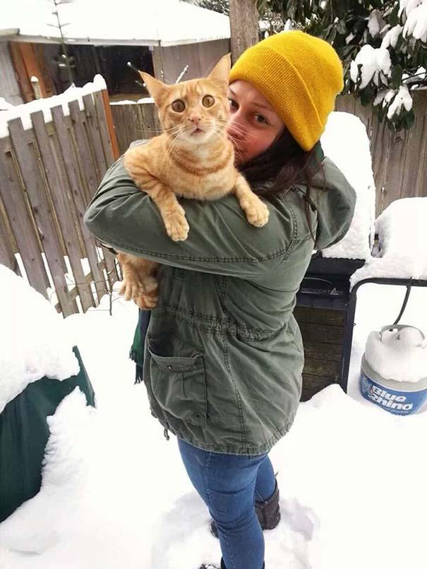 Γάτες έρχονται για πρώτη φορά αντιμέτωπες με χιόνι (3)