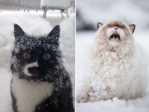 Γάτες έρχονται για πρώτη φορά αντιμέτωπες με χιόνι (4)