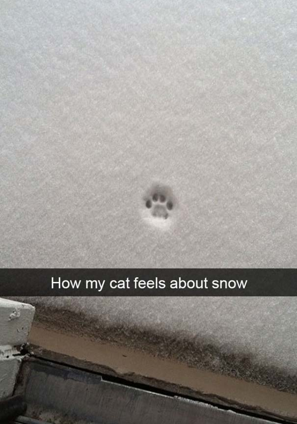 Γάτες έρχονται για πρώτη φορά αντιμέτωπες με χιόνι (5)