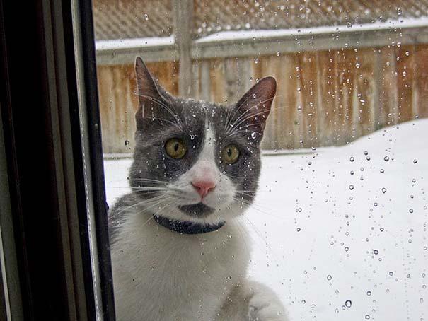 Γάτες έρχονται για πρώτη φορά αντιμέτωπες με χιόνι (8)