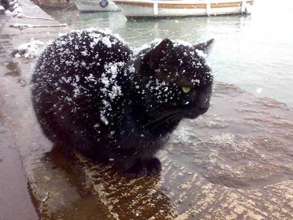 Γάτες έρχονται για πρώτη φορά αντιμέτωπες με χιόνι (9)