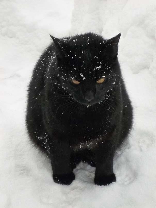 Γάτες έρχονται για πρώτη φορά αντιμέτωπες με χιόνι (11)