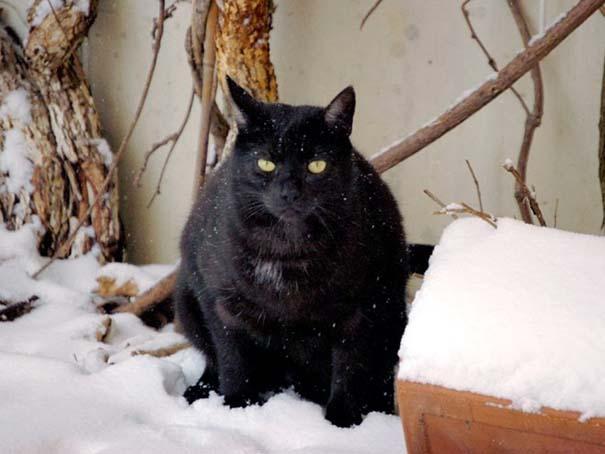 Γάτες έρχονται για πρώτη φορά αντιμέτωπες με χιόνι (12)