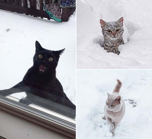 Γάτες έρχονται για πρώτη φορά αντιμέτωπες με χιόνι (13)