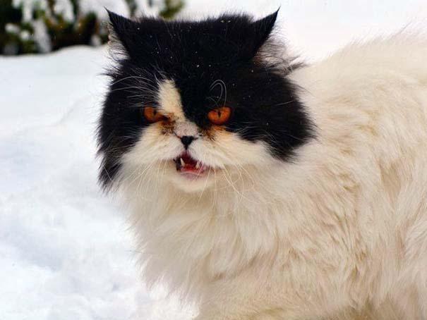 Γάτες έρχονται για πρώτη φορά αντιμέτωπες με χιόνι (14)