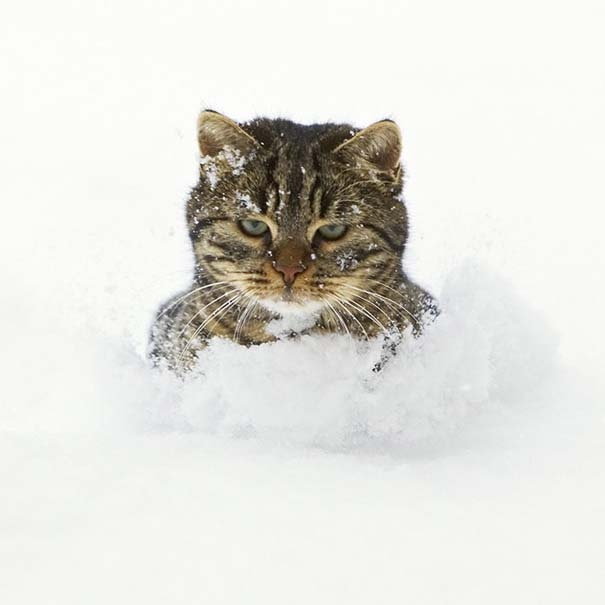 Γάτες έρχονται για πρώτη φορά αντιμέτωπες με χιόνι (15)