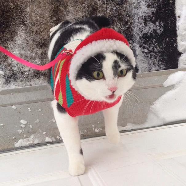 Γάτες έρχονται για πρώτη φορά αντιμέτωπες με χιόνι (16)