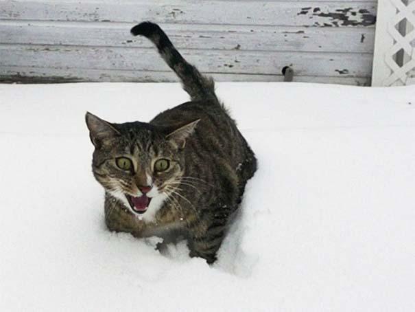 Γάτες έρχονται για πρώτη φορά αντιμέτωπες με χιόνι (17)