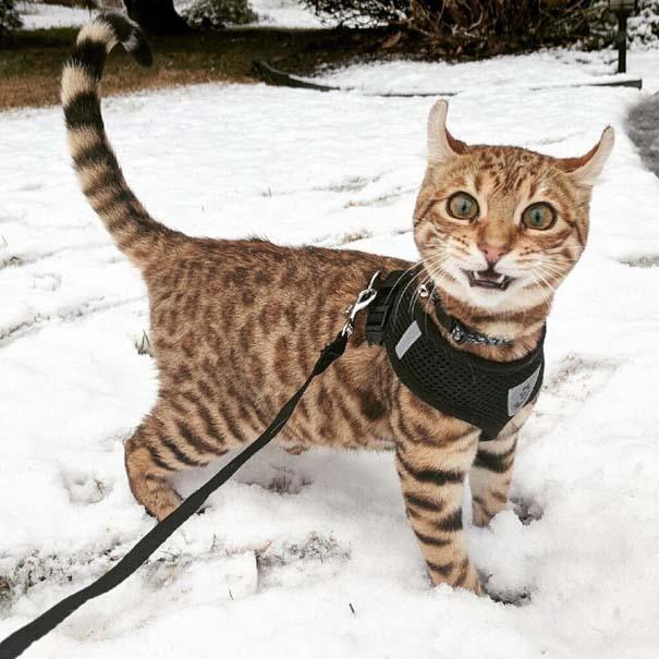 Γάτες έρχονται για πρώτη φορά αντιμέτωπες με χιόνι (18)