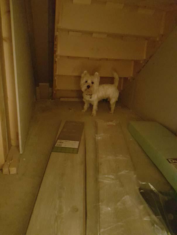 Κατασκευάζοντας ένα υπέροχο δωμάτιο για το σκύλο κάτω από τη σκάλα (5)